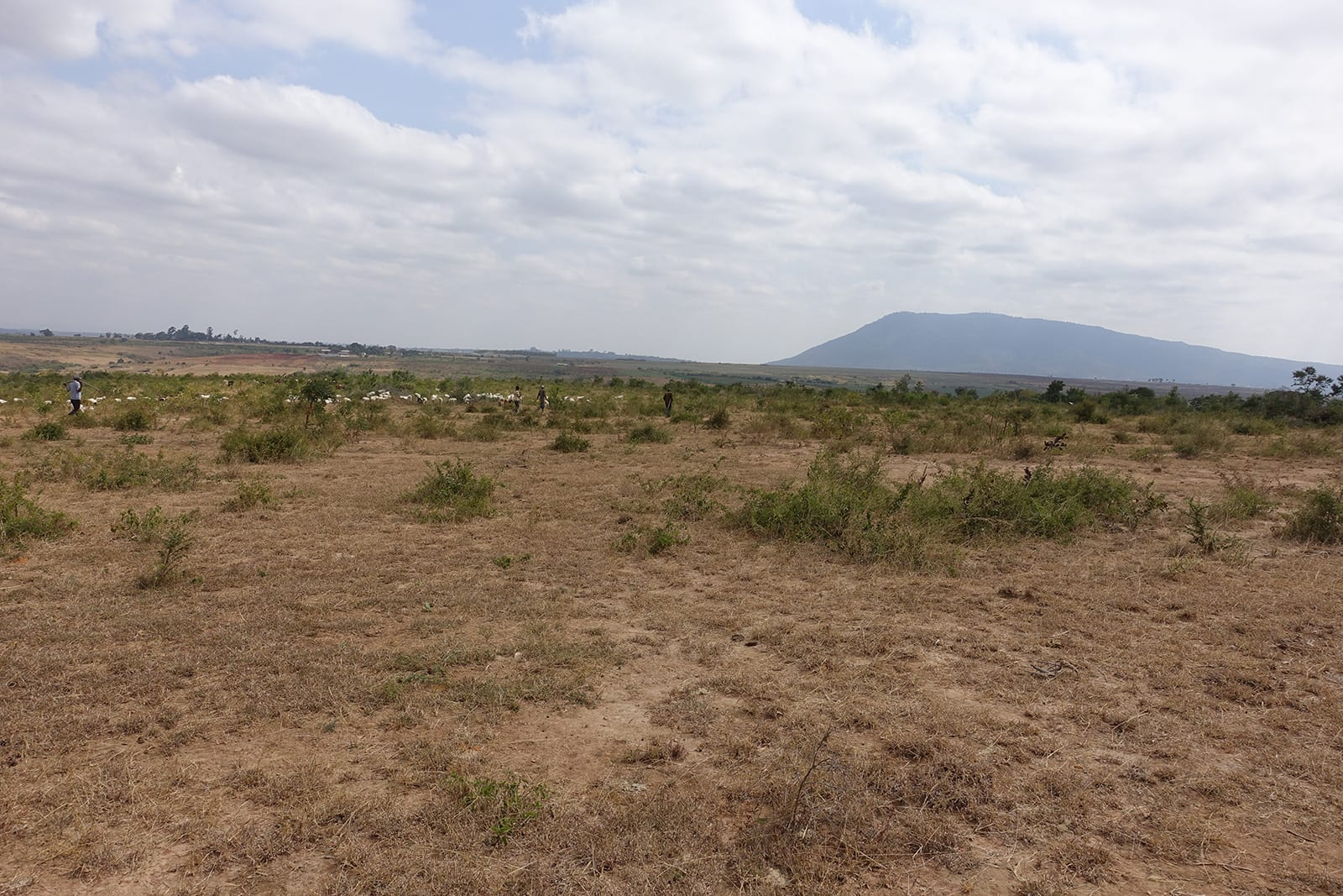 Before picture of Environmental Conservation site