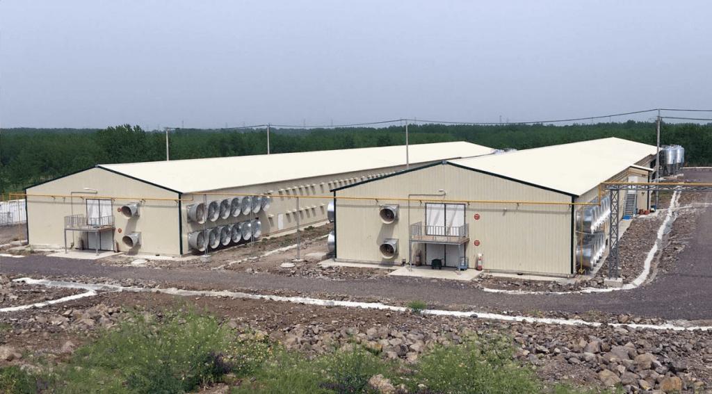Chicken facility in Kenya